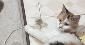 cat-sick